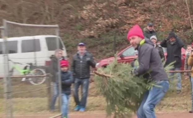 В Германия се състезават по хвърляне на коледни елхи