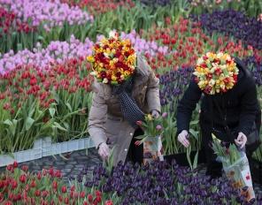 Национален ден на лалето в Амстердам