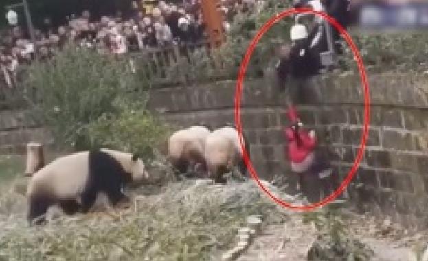 Дете падна в клетка с панди в Китай (ВИДЕО)