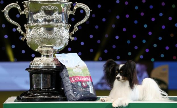 Малко куче порода папийон спечели престижно изложение в Бирмингам