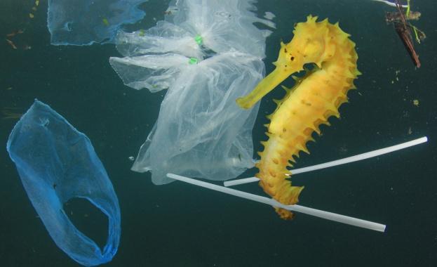 През 2050 г. в морето ще плуват повече пластмасови предмети, отколкото риби