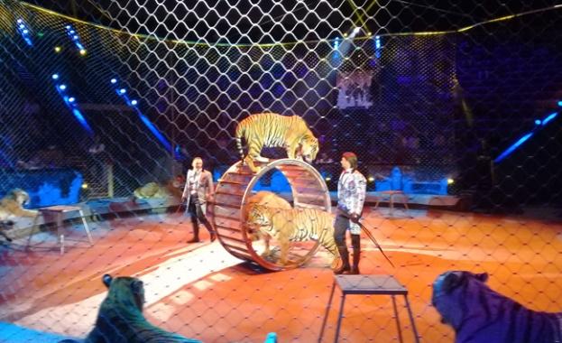 """КНСБ отчита """"внос""""  на работна ръка: най-много са учители, спортисти, балерини и циркови артисти"""