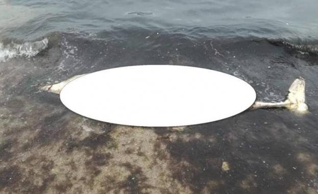 Снимка: Морето изхвърли делфин до Втора буна във Варна.
