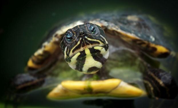 Снимка: Почина една от най-редките костенурки в света, остават само три от вида й