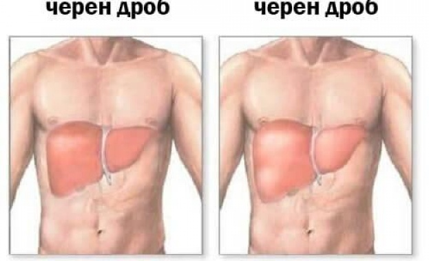 Всеки трети българин не знае къде се намира черният дроб в човешкото тяло