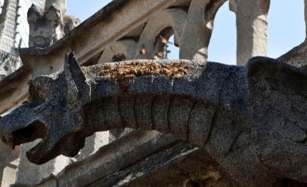 """Около 200 000 пчели, обитаващи кошери в катедралата """"Нотр Дам"""