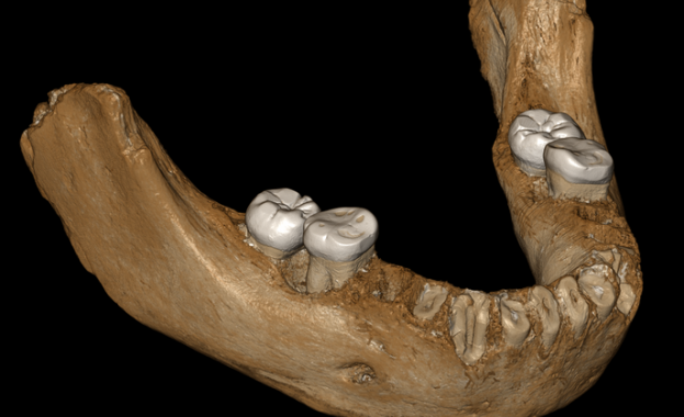 Долна челюст с големи зъби, открита в пещера на 3300
