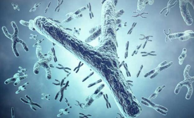 Британски генетици изчислиха, че след няколко милиона години Y хромозомата