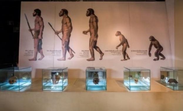 Учени от Чикагския университет стигнаха до заключението, че Хомо сапиенс