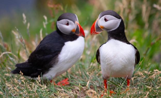 Когато стотици птици кайри бяха открити мъртви на брега на