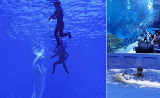 Първият в света аквариум, разположен на височина над 2,2 хиляди