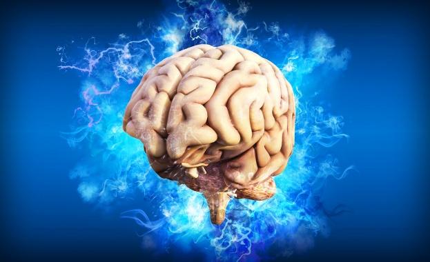 Мозъкът пази спомените ни на две места