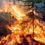Обявена е висока степен за опасност от пожари