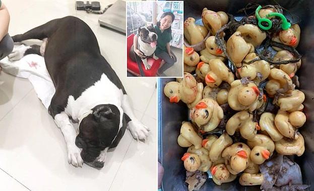 Специалисти от ветеринарна клиника в Тайланд са направили операция на
