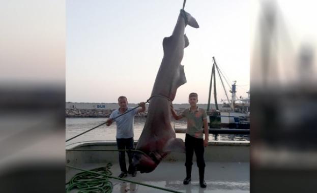 Турски рибари уловиха 5-метрова акула