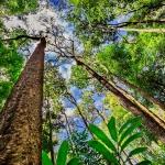 """Кой сече гори в Амазония, за да """"оцелее""""?"""
