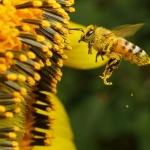 """Експерти на ДФЗ разясниха на близо 50 стопани новата пчеларска програма  на фермерски пазар """"Оборище"""""""