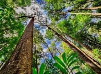 """Красотата на Амазонската джунгла - """"белият дроб"""" на Земята"""