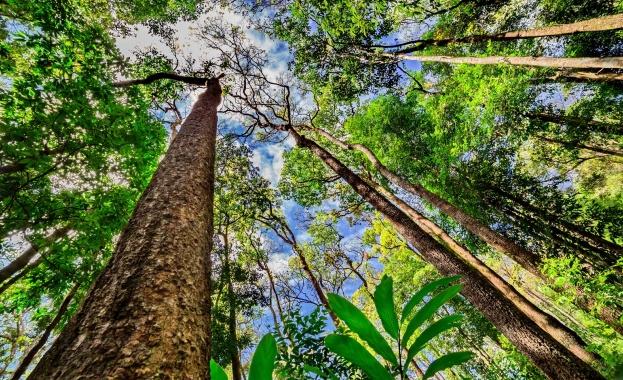"""Снимка: Кой сече гори в Амазония, за да """"оцелее""""?"""