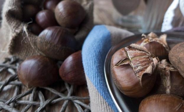 От хиляди години ядливите сладки кестени се използват заради лечебните