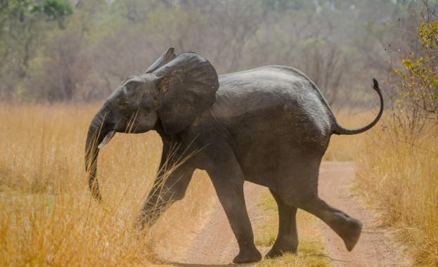 Най-малко 55 слона са умрели от глад в най-големия национален