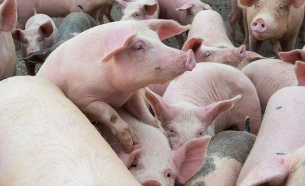 Инспектори от Областна дирекция по безопасност на храните Бургас умъртвиха