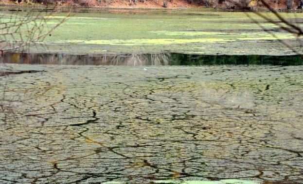 Панчаревското езеро почти цялото е покрито от водорасли и наноси