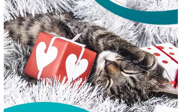 Purina ONE ще помогне на семействата, които осиновят котка до