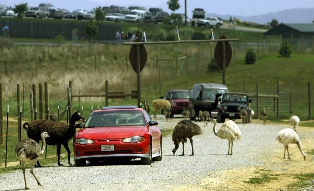 Птици ему окупираха малкия австралийски град Нанап в западната част