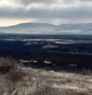 Пожарът в Драгоманското блато унищожи 80% от растителността