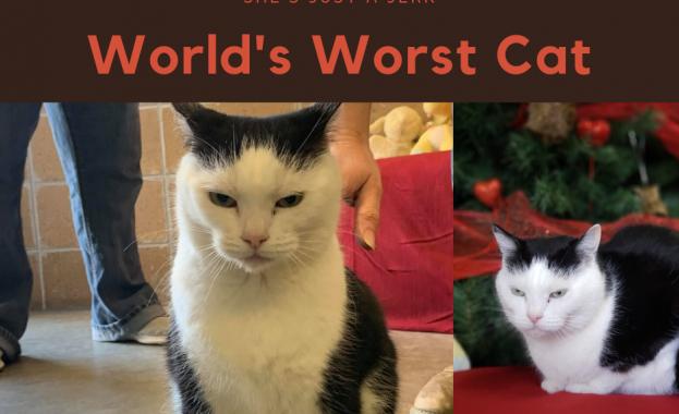 Приют за котки в щата Северна Каролина разпространи искрена обява