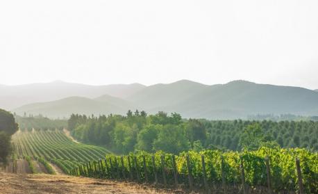 Глобалното затопляне застрашава производството на вино