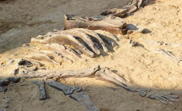 Откриха смъртоносна човешка болест в динозавър на 66 млн. години