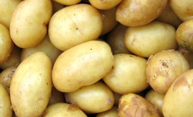 Яденето на варени или печени картофи понижава кръвното налягане и