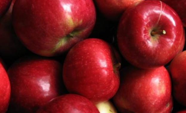 Здрави и тонизирани през есента: Какво да хапваме?