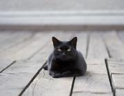 Ново приложение предлага запознанства на любители на котки
