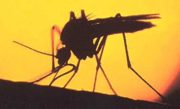 Топлата зима е нанесла удар по комарите