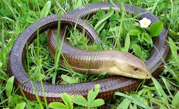 Как да се предпазим от ухапване от змия?