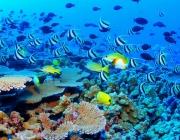ЮНЕСКО: Големият бариерен риф трябва да бъде обявен за застрашен