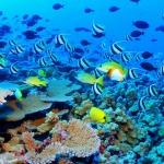 До 99% от Големия бариерен риф вероятно ще изчезне до 2025 г.