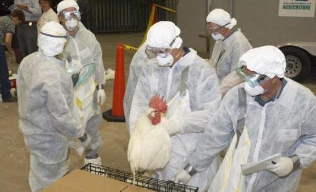 Ново огнище на птичи грип установиха от Агенцията по храните