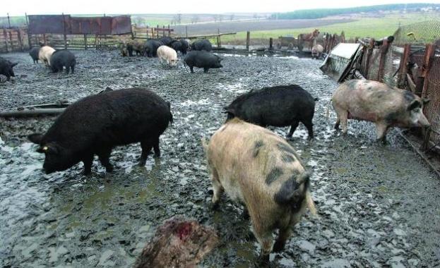 Свиневъди искат обявяване на извънредно положение
