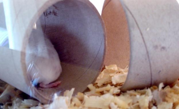 Хамстерите може и да са от най-ярките видове, които са