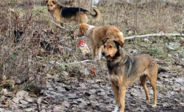Кучетата могат да подушат 750 души на час за коронавирус