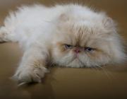 Отбелязваме Световния ден на котката