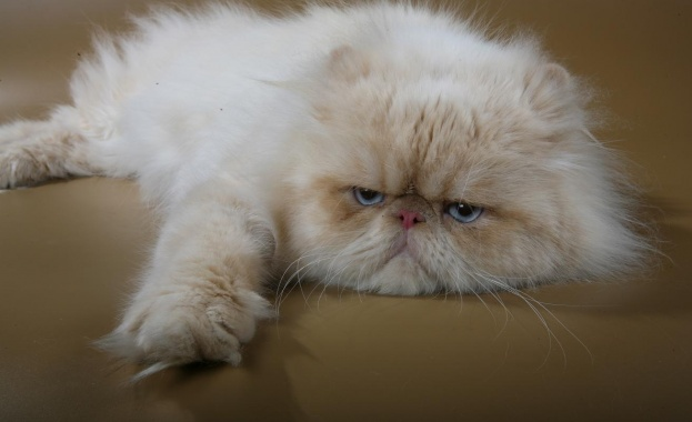 Световния ден на котката бива отбелязан от повечето любители на