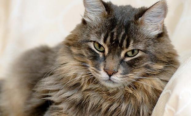 Съпрузи спечелиха 1,2 милиона долара от лотарията благодарение на котката си