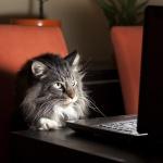 Ветеринари: Дръжте котките си у дома