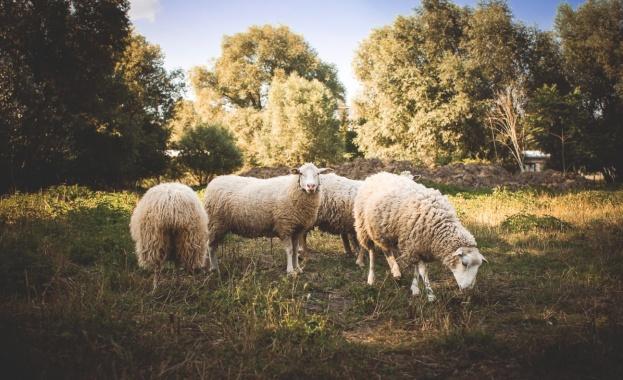 Ограничаване употребата на антибиотици в животновъдството не трябва да бъде за сметка на здравословния статус на животните