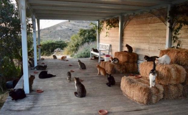 Бездомните животни бедстват по време на извънредните мерки заради COVID-19